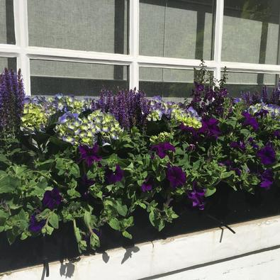 window box Landscaper in Central London and Knightsbridge